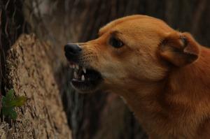 dog-486550_1280